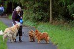 Πιο δραστήριοι οι ηλικιωμένοι με σκύλο