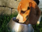 Σκυλοτροφές επικίνδυνες για ζώα και ανθρώπους