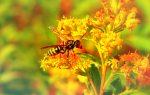 Η Ουτρέχτη κάνει δώρο στις μέλισσες!