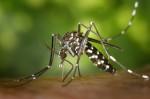 Τι γίνεται με την ελονοσία στην Ελλάδα;
