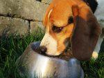 Οι σκύλοι φανερώνουν τις διατροφικές συνήθειες των αφεντικών