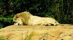 Πες μου πώς κοιμάσαι, να σου πω τι… ζώο είσαι!