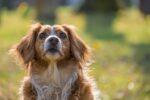 Τα σκυλιά ζηλεύουν ακόμη και στη σκέψη ότι χαϊδεύουμε άλλα σκυλιά